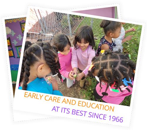 live oak preschool 50th year celebration of oak park preschool inc general 323