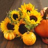 Fun Fall, Harvest and Halloween Family-Friendly Events