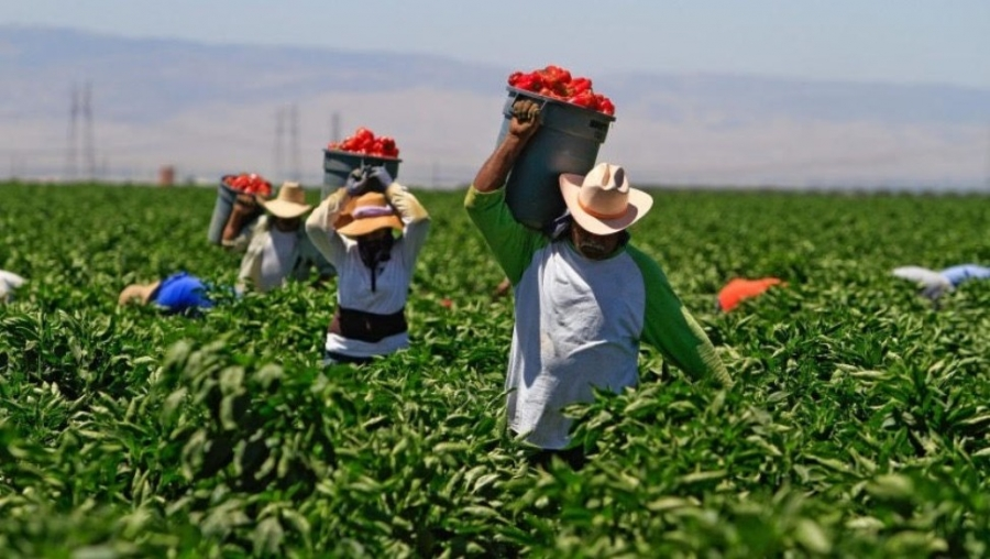 Unsung Heroes: Mexican Laborers Still Working Hard In The Fields, Providing Our Food