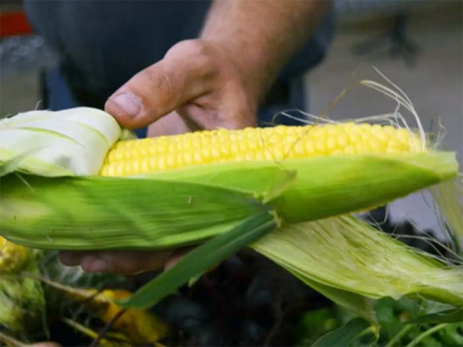 Summer Tip: Eat Your Sweet Corn Raw!