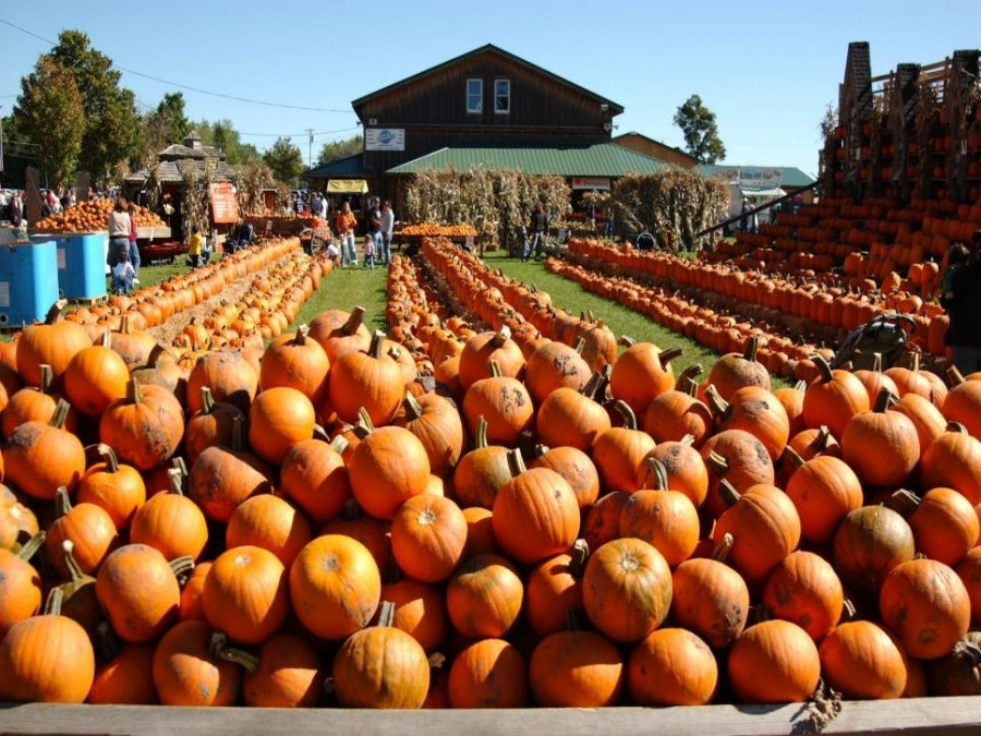 Top 15 U.S. Pumpkin Patches