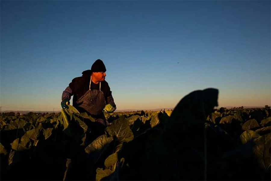 How virus, racism devastated Latino farmworkers in California