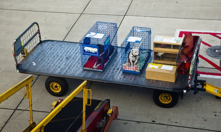 If You Love Your Pet, Think Twice Before Checking Them As Airplane Cargo