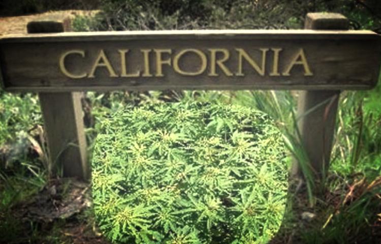 Sacramento City Council Looking Into Increasing Number of Dispensaries