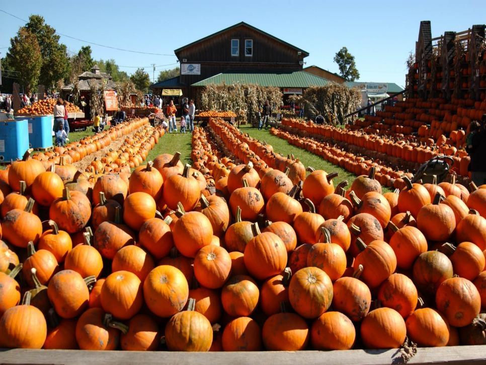 Top 15 U.S. Pumpkin Patches