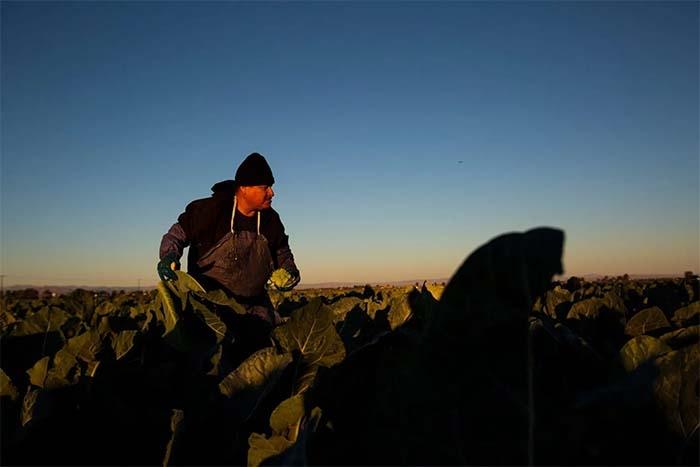 How virus, racism devastated Latino farmworkers in California
